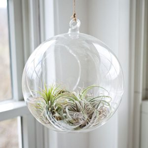 sea-plants-glass-balloon