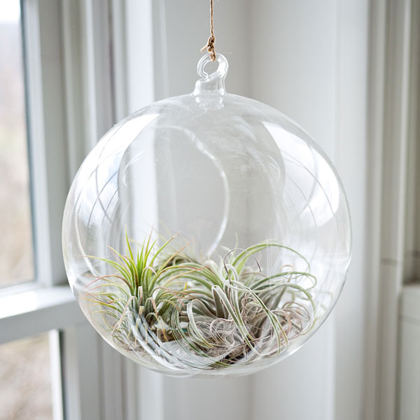sea-plants-glass-balloon